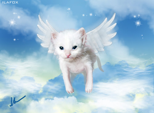 Cuidar de gatinho bebê, gatinho muito pequeno, gatinho que não sabe andar, gatinho doente, Hipoplasia Cerebelar, ilustração by ila fox