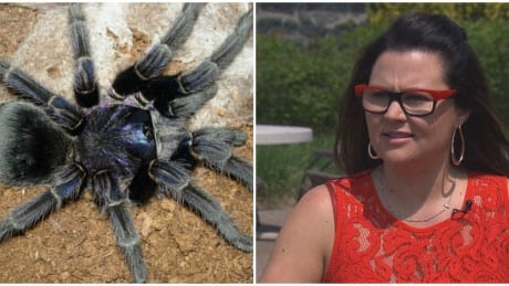 Tarantulas on a plane: Passengers screamed, climbed on seats