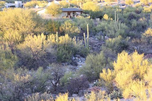 Tucson 24Dec09