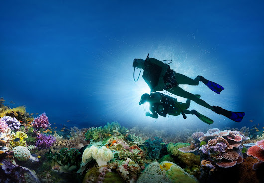 Scuba Diving for Beginners: 7 Tips to Learn Scuba Diving