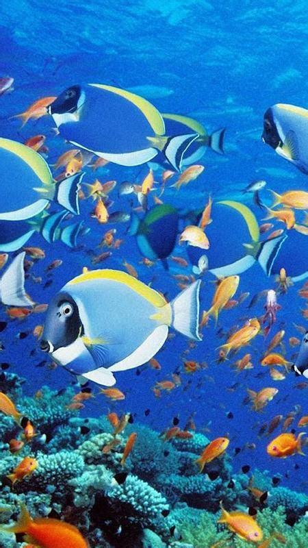 akuarium hidup wallpaper gambar ikan bergerak apk
