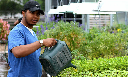 A Garden Grows in Cabrini-Green - Modern Farmer