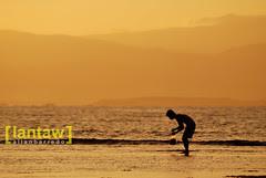 Sunrise Seaweed Gatherer