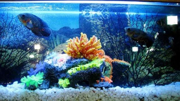 Curiosidades sobre los peces en verano
