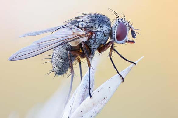 Εκπληκτικές macro φωτογραφίες εντόμων (7)