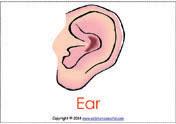 diphthong ear%20flashcards