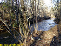 Photo: A view of Mike's creek and goose.