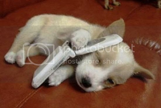 Sleeping puppy cuddling a flip phone