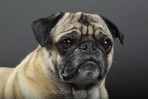 Wrinkles :-) by Megan Lorenz