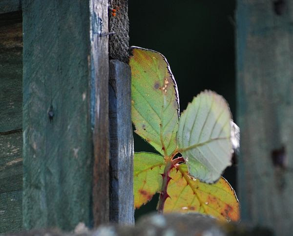Peeking Flower