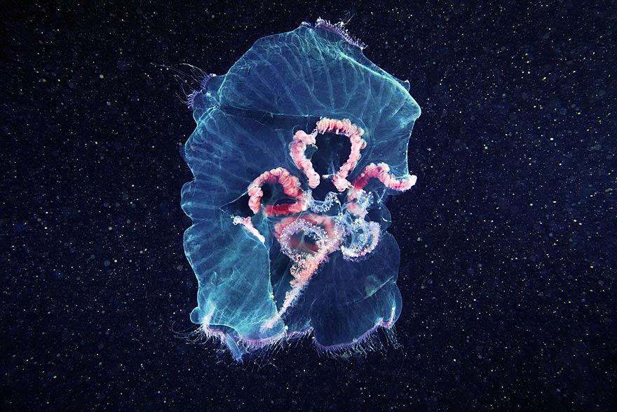underwater-jellyfish-alexander-semenov-aquatis-1-2