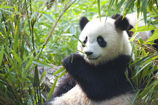 Beijing Pandas & Pagodas China Holidays | Travelsphere Escorted Tours