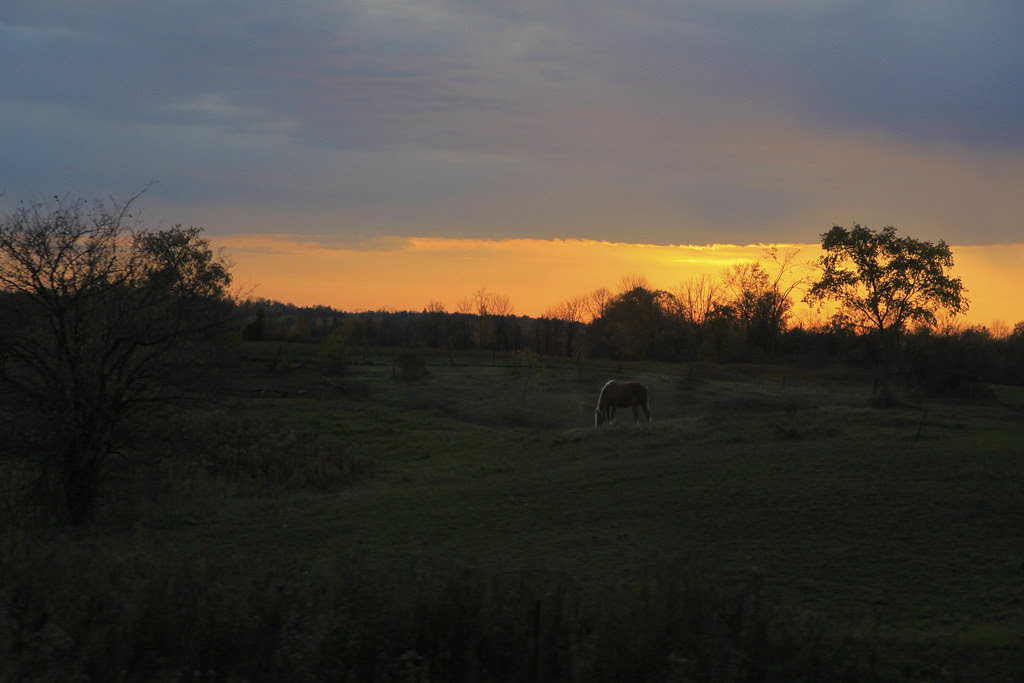 driveby   sunset horse