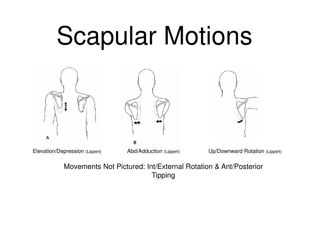 PPT - The Shoulder: Positioning and Handling ...