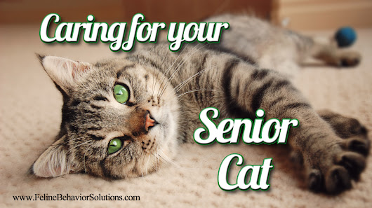 Caring for your Senior Cat – Feline Behavior Solutions - Cat Behaviorist
