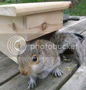 Guest Squirrel