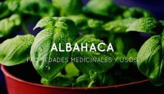 USOS MEDICINALES Y GRANDES PROPIEDADES DE LA ALBAHACA