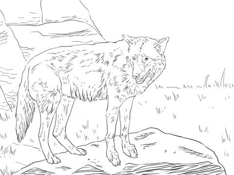 Maned Wolf Coloring Coloring Page Coloring Pages