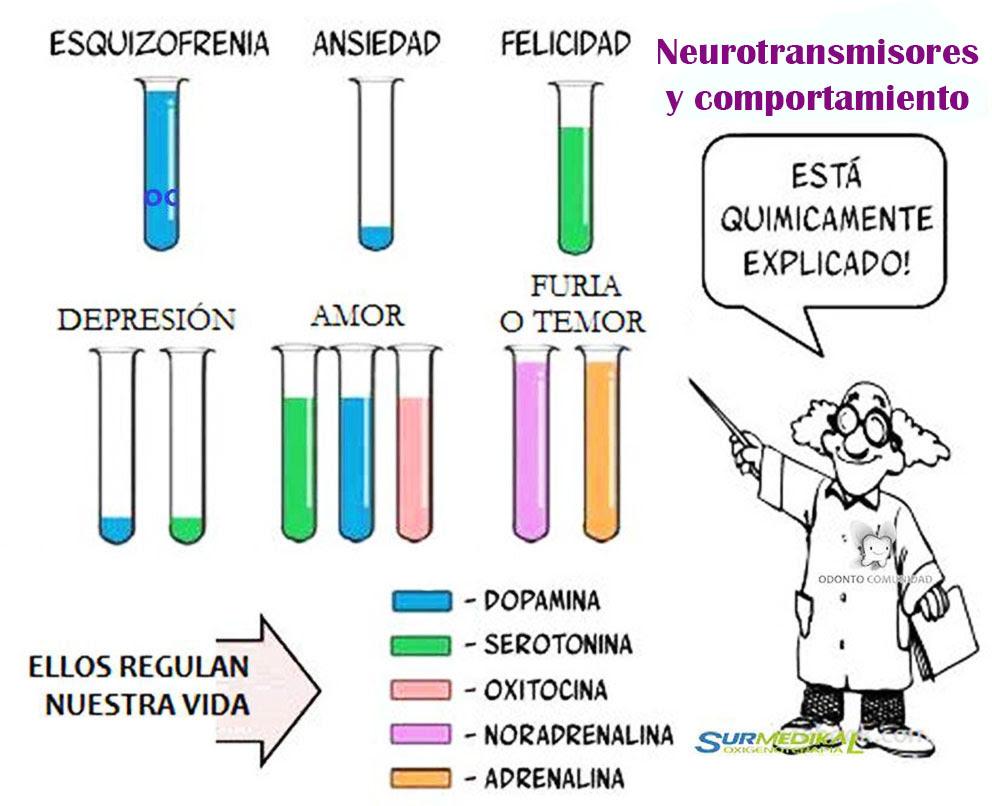 Los neurotransmisores y su comportamiento