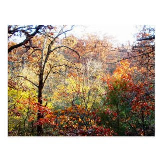 Autumn Leaves in Missouri Postcard