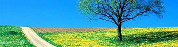 Curiosidades-Sobre-a-Primavera