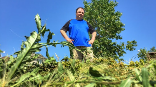 Winnipeg man vows to fight city over unmown boulevard, calls bylaw 'slavery'