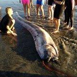news-odd-20131019-US-ODD--Giant.Fish