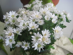 Chrysanthemum / Crizanteme