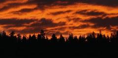 tree-silhouettes-sunset