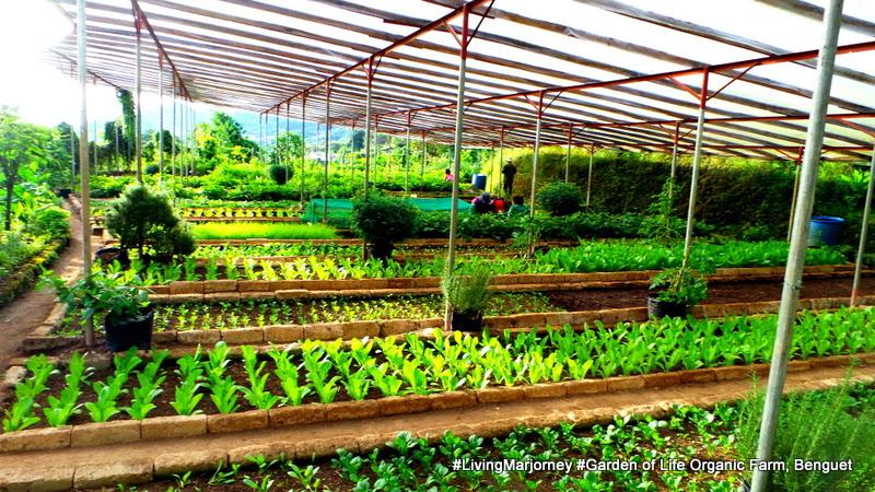 Benguet: The Garden of Life Organic Farm