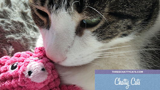 Chatty Cats: Piggies, Disappointment and More! | Three Chatty Cats