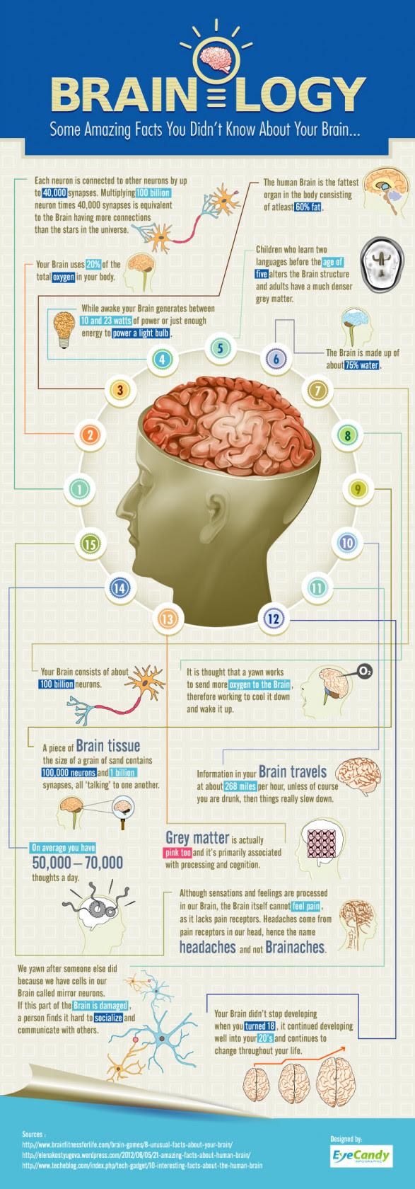 Brainology -Some Amazing Facts you didn