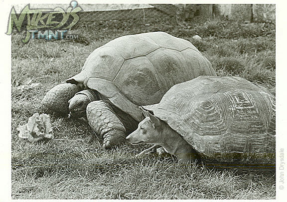 Tokka & Rahzar  .. ..(Tortoise With a Difference )