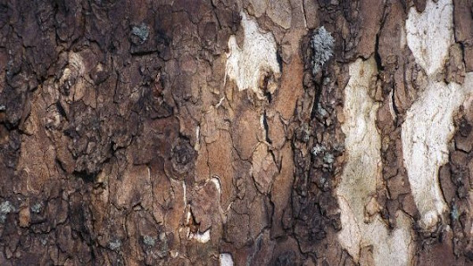 What You Need to Know About Tree Bark Damage | Tree Service in Indianapolis
