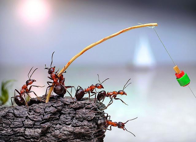 pavlov ants 01