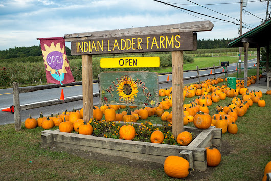 The Farm Store and Cider Doughnuts at the Indian Ladder Farms