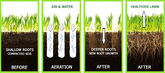 Why Aerating, Seeding and Fertilizing in the Fall is Critical - GreenLawn by Design