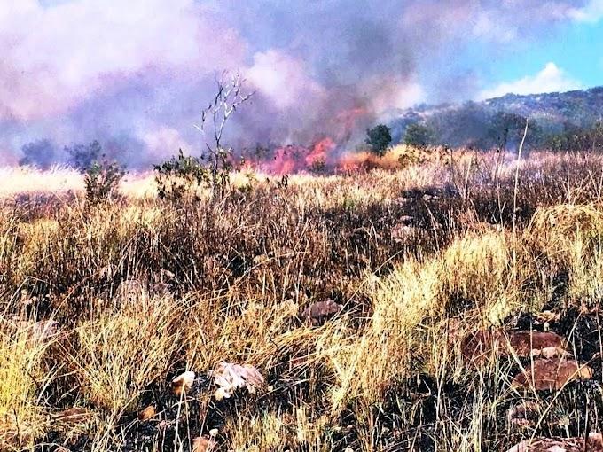 Hutan Lindung Egon Ilimedo Kembali Terbakar. Bagaimana Pencegahannya? oleh - howtoindonesia.xyz