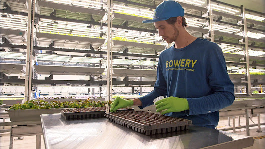 Vertical farming is revolutionizing how food is grown in America