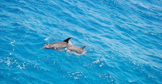 From Hurghada: Swim with Dolphins, Full Day Snorkeling Tour