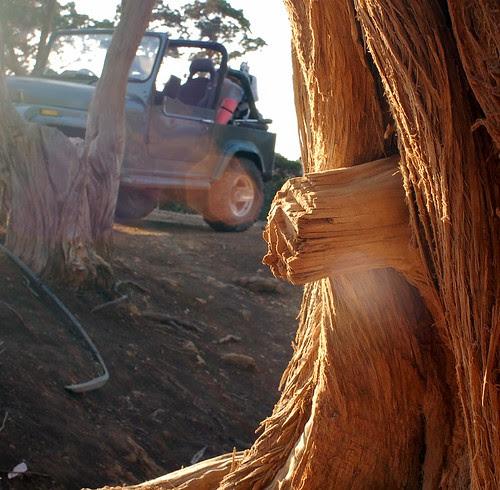 treetrunk in the sun (camping at Fontana Amorosa)