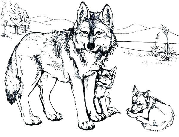 wolf ausmalbilder zum ausdrucken  malvorlagen fur kinder