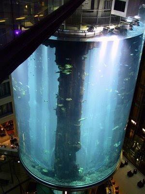 Aquário gigante: acho que não cabe aqui em casa