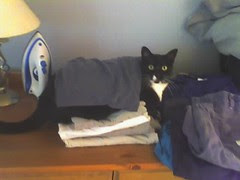 laundry is no object