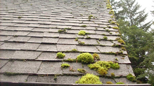 4 Reasons to Clean Your Roof Instead of Replacing it