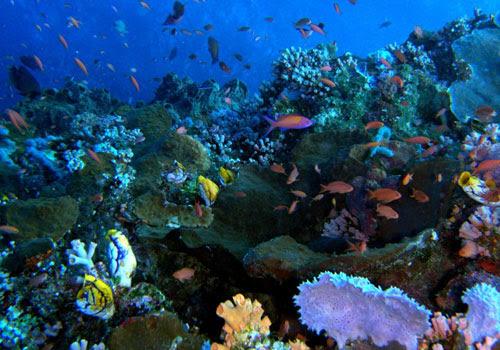Bunaken (North Sulawesi, na Indonésia)