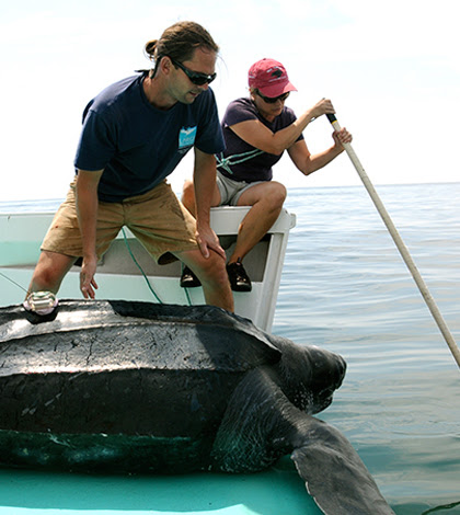 Underwater Cameras And Autonomous Vehicles Track Leatherback Turtles