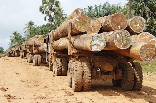 Keep Liberia's illegal timber out of the EU!