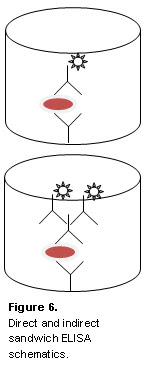 Figure 6. Direct and indirect sandwich ELISA schematics