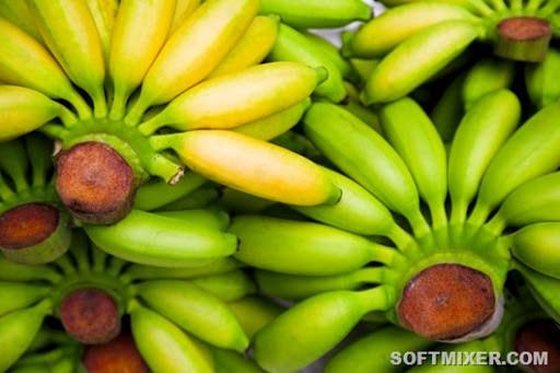 Что надо знать о бананах